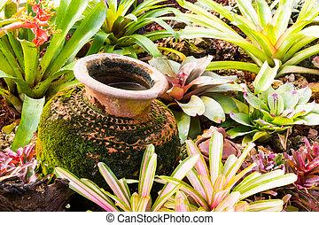 planta, jardín