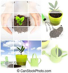 planta, jardín, encima, aislado, white., herramientas