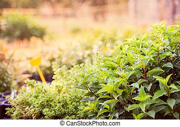 planta, jardim, folhas, verde, crescendo, hortelã
