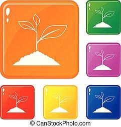 planta, jogo, ícones, cor, vetorial, crescendo