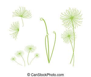 planta, jogo, papyrus, cyperus, fundo, branca