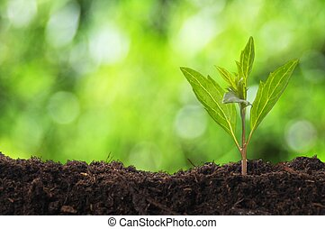 planta jovem