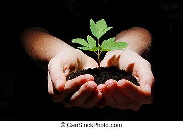 planta jovem, com, solo, em, mãos