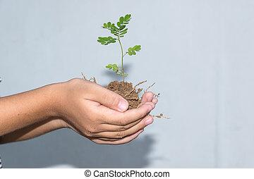 planta jovem, em, hands.