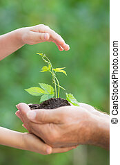 planta jovem, em, mãos, contra, experiência verde