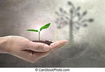 planta, jovem