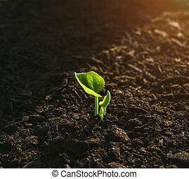 planta joven, crecer, en, luz del sol