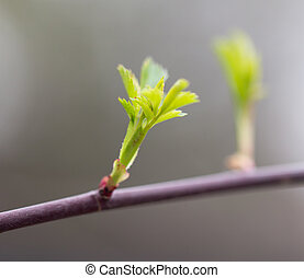 planta joven, en, naturaleza