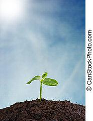 planta joven, en, tierra, concepto, de, nueva vida