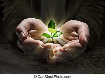 planta, luz, em, a, mãos, conceito