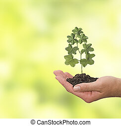 planta, mão