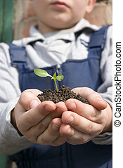 planta, mãos