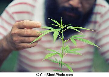 planta maconha, feliz, homem
