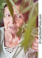 planta maconha, mulher, sênior, chocado