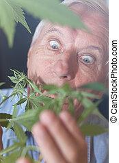 planta maconha, sênior, surpreendido, homem