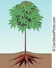 planta, mandioca