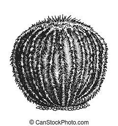 planta, mano, vector, tinta, dibujado, cacto, desierto,...