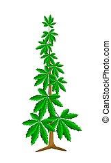 planta, marijuana, cannabis, fundo, branca, ou