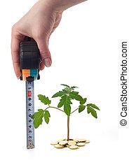 planta, medidas, crescimento, mão