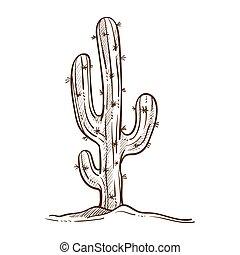 planta, mexicano, esboço, esboço, ilustração, vetorial, monocromático, cacto