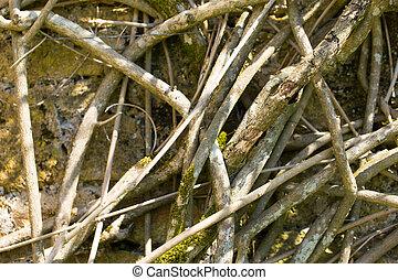 planta muerta, grunge, raíces, plano de fondo