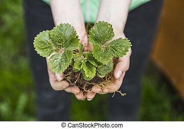 planta, mujer, joven, manos de valor en cartera