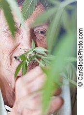 planta, mulher, cannabis, cheirando, sênior, feliz