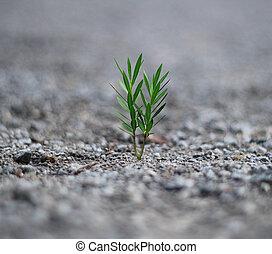 planta, nacimiento