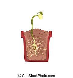planta, olla, cruz, tierra, frijol,  vector, verde, Ilustración, Crecer, Crecimiento, suelo, Semilla, sección, etapa