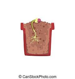 planta, olla, cruz, tierra, frijol,  vector, Crecimiento, Ilustración, Crecer, suelo, Semilla, sección, etapa