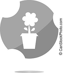 planta, panela flor, branca, isolado