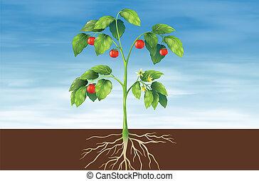 planta, partes
