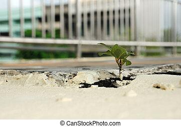 planta, pequeno, footbridge., cima, crescer