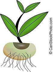 planta, pequeno, vetorial, seedling., ilustração