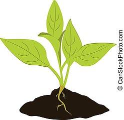planta, planta de semillero, icono
