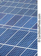 planta, poder solar