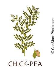 planta, pods., illustration., hojas, vector, arveja de pollito