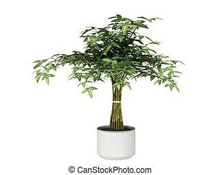 planta potted
