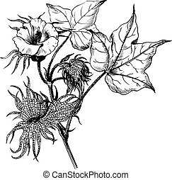 planta, rama, algodón