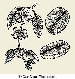 planta, rama, café