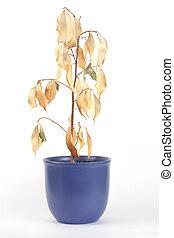 planta, secado