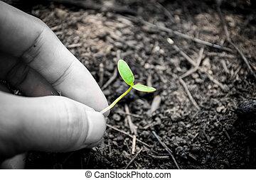 planta, seedlings, com, mãos