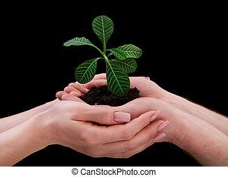 planta, segurando, mãos