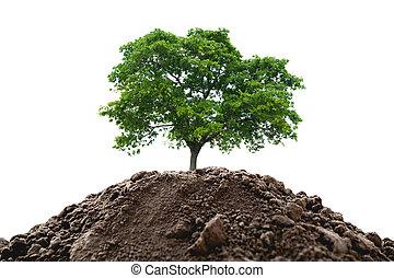 planta, solo, jovem, isolado, experiência., verde, crescendo, branca