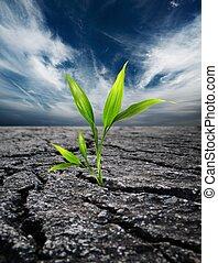 planta, solo, morto, verde, trough, crescendo