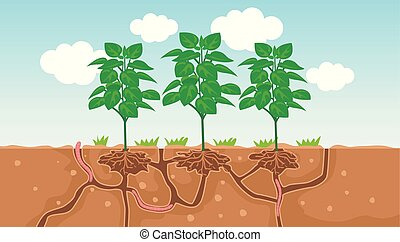 planta, solo, verme, ilustração, passagem, água, ar