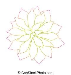 planta suculento, arte, fundo, linha branca