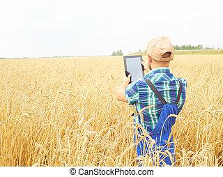 planta, trigo, tablet., harvest., campo, agricultor, usando, fotografar