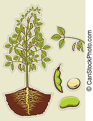 planta,  vector, aislado, Ilustración, diseño, soja, verde