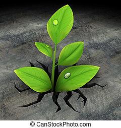 planta, verde, asfalto